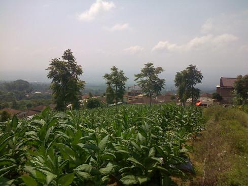 Bulu-20140811-01543